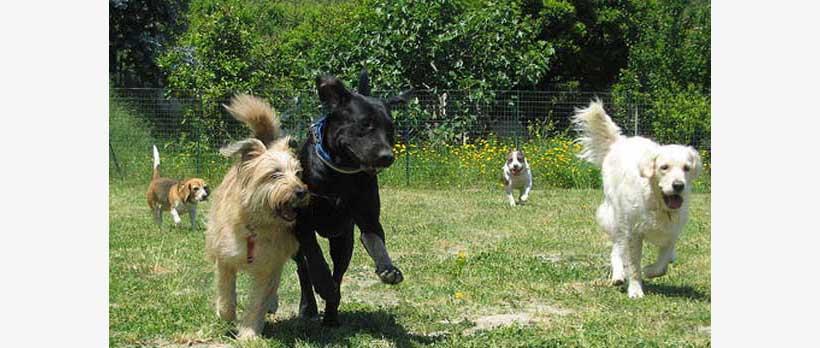 cani che corrono all'asilo
