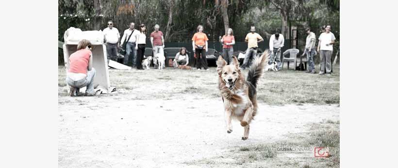 cane stich che corre felice