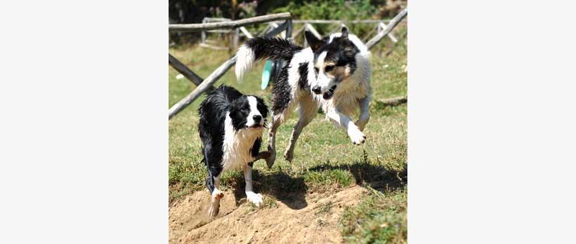 cani che giocano all'asilo