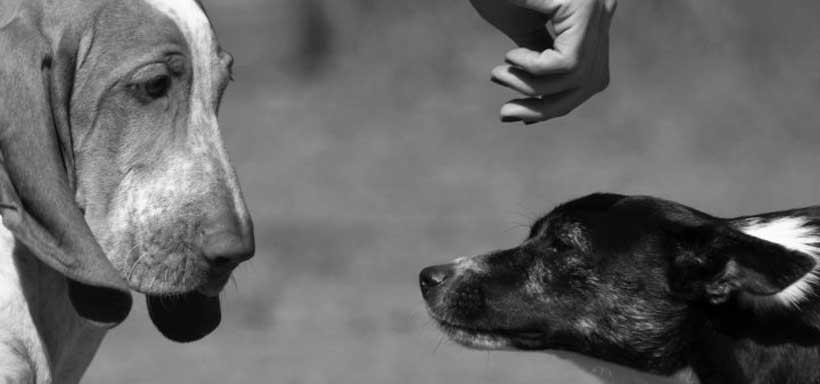 i corsi alla voce del cane